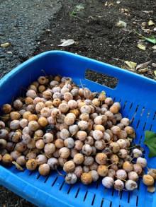 $うさぎ夫婦の農業への道 ~熊本で無農薬・有機野菜作りはじめます~-未設定
