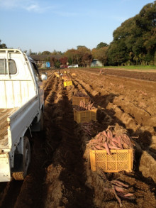$うさぎ夫婦の農業への道 ~熊本で無農薬・有機野菜作りはじめます~-ipodfile.jpg